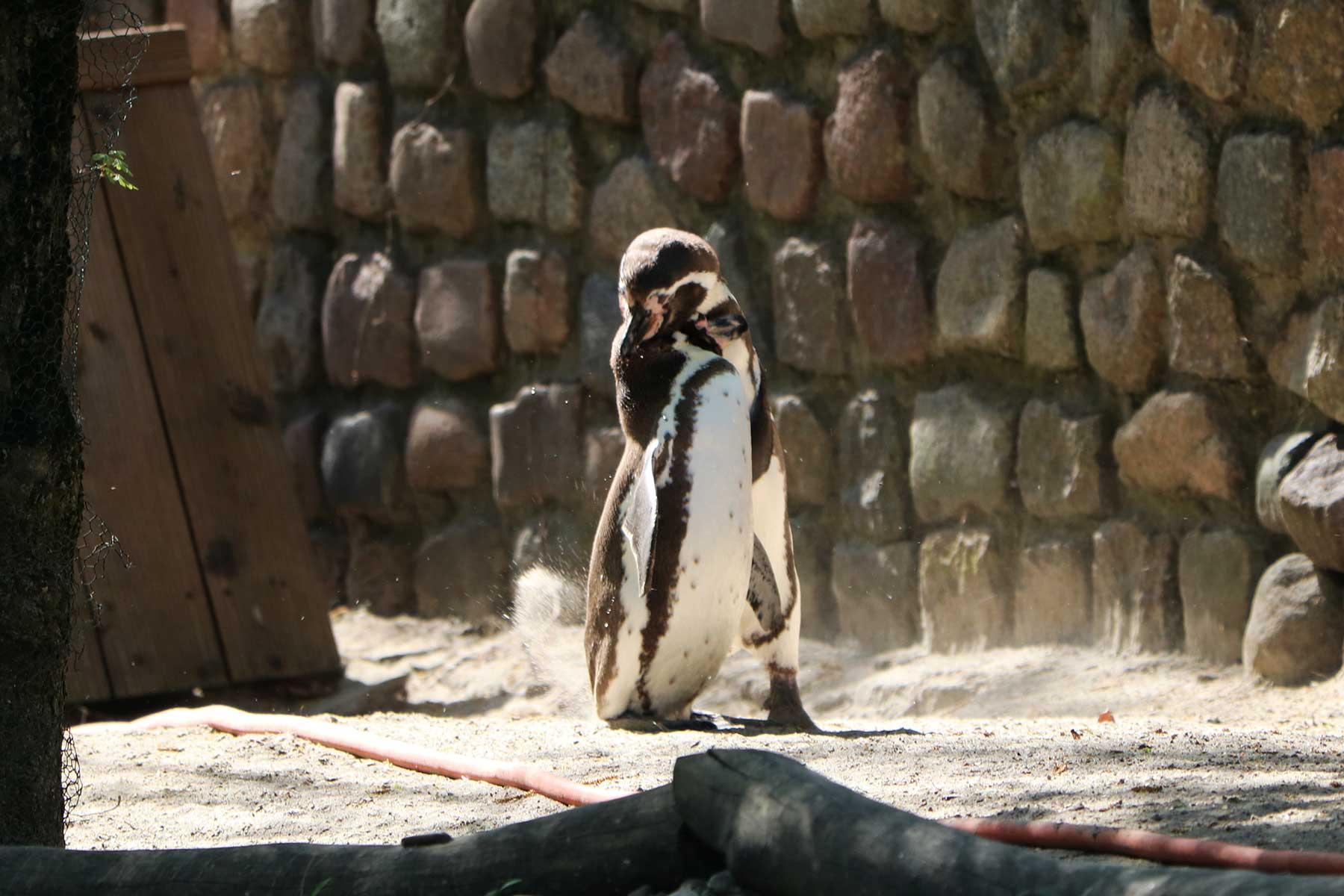 Bilder vom Besuch im Zoologischen Garten Eberswalde Zoologischer-garten-eberswalde-Besuch_12