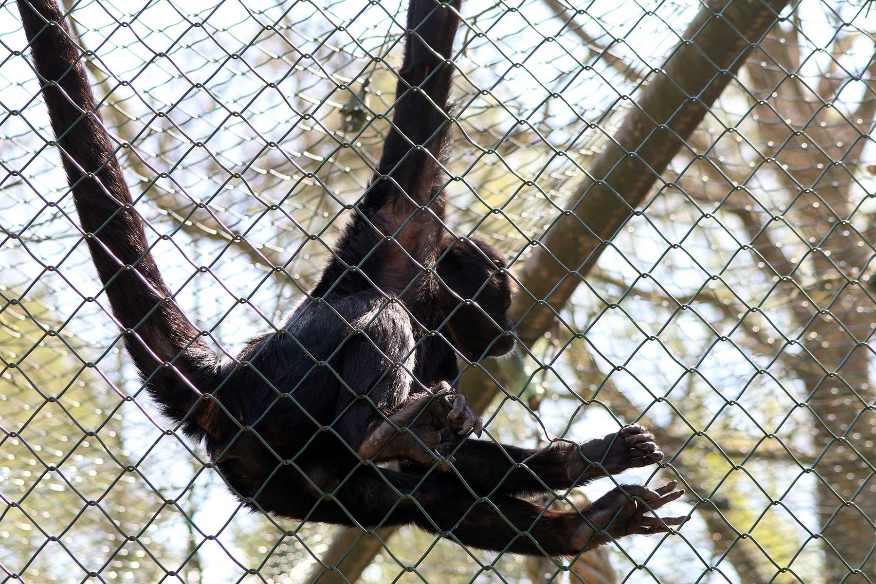 Bilder vom Besuch im Zoologischen Garten Eberswalde Zoologischer-garten-eberswalde-Besuch_15