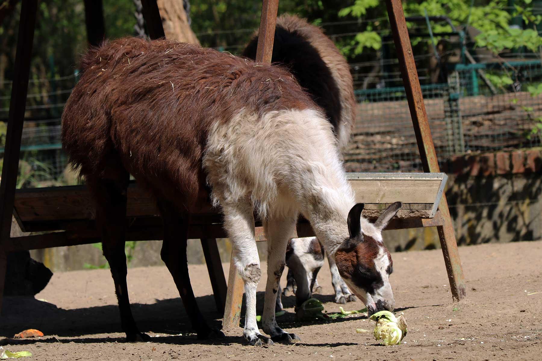 Bilder vom Besuch im Zoologischen Garten Eberswalde Zoologischer-garten-eberswalde-Besuch_19