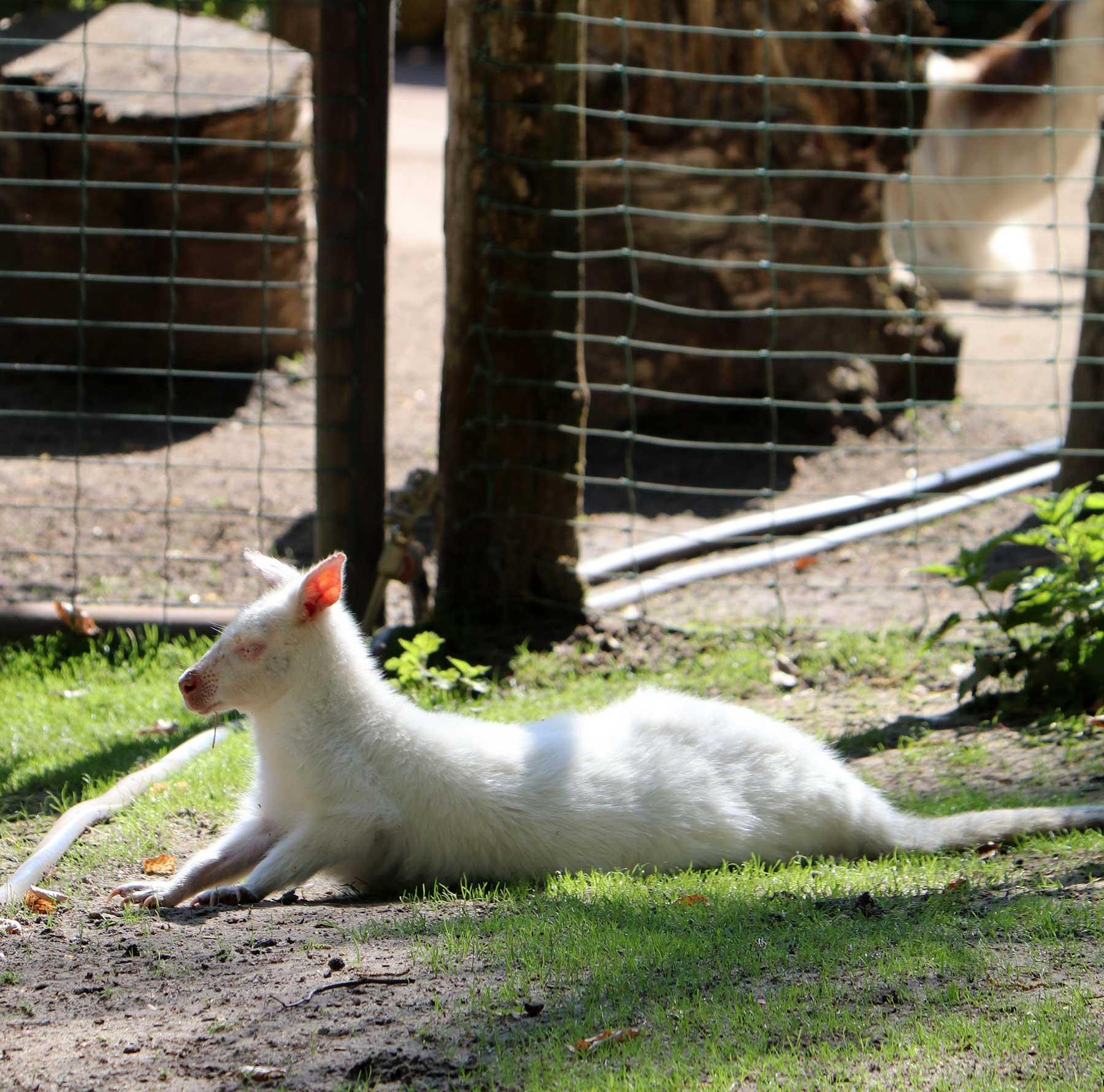 Bilder vom Besuch im Zoologischen Garten Eberswalde Zoologischer-garten-eberswalde-Besuch_24