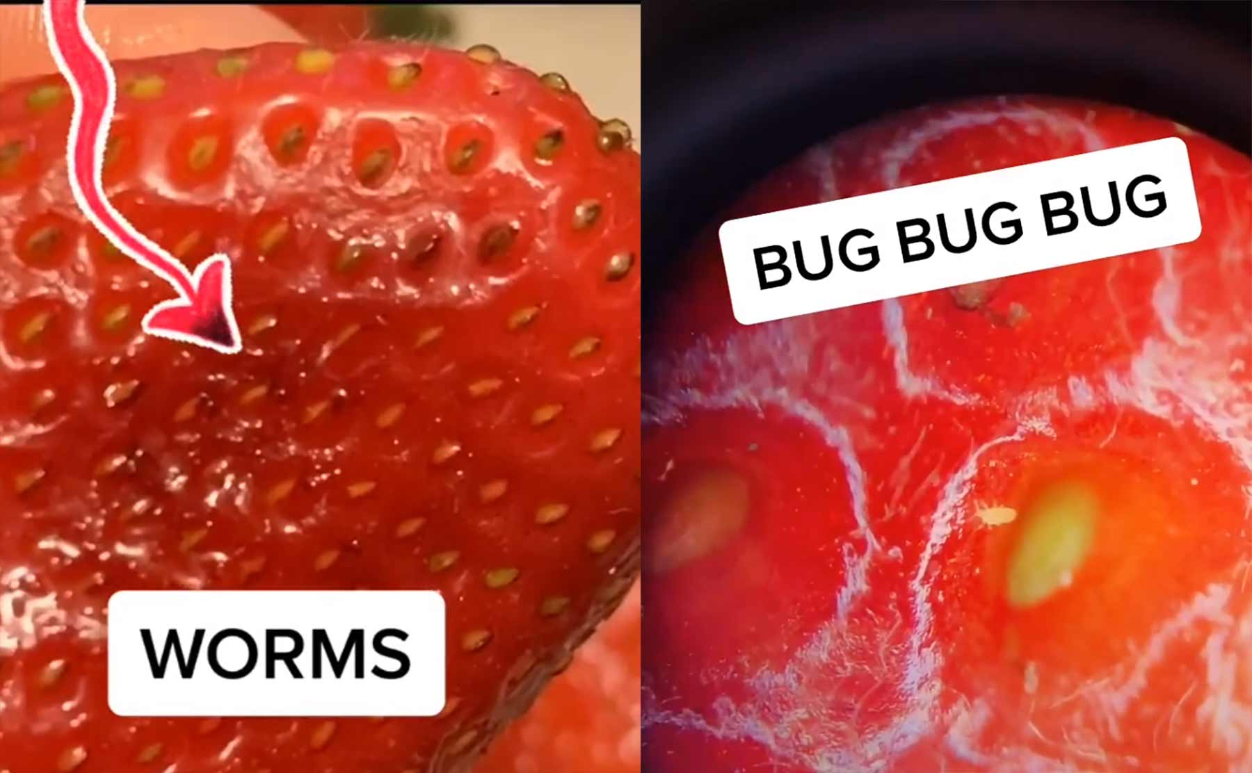 Erdbeeren richtig säubern mit Salzwasser