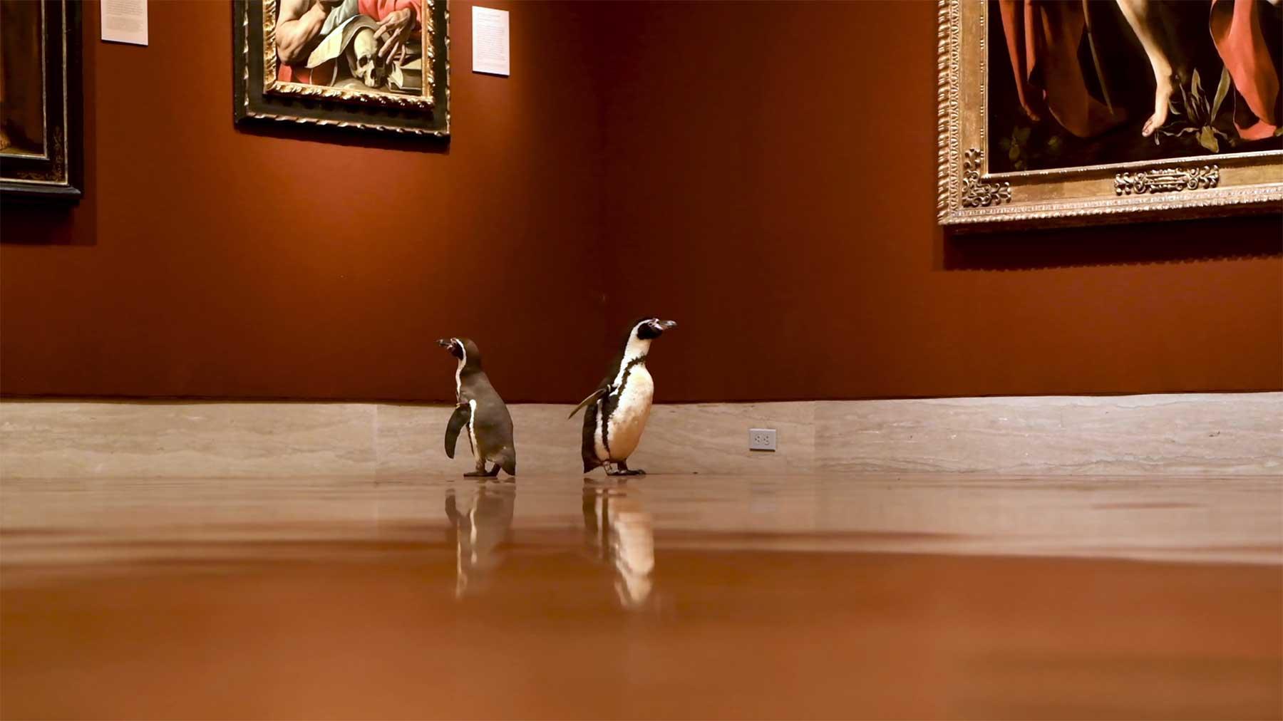 Nur ein paar Pinguine, die durch ein Museum laufen