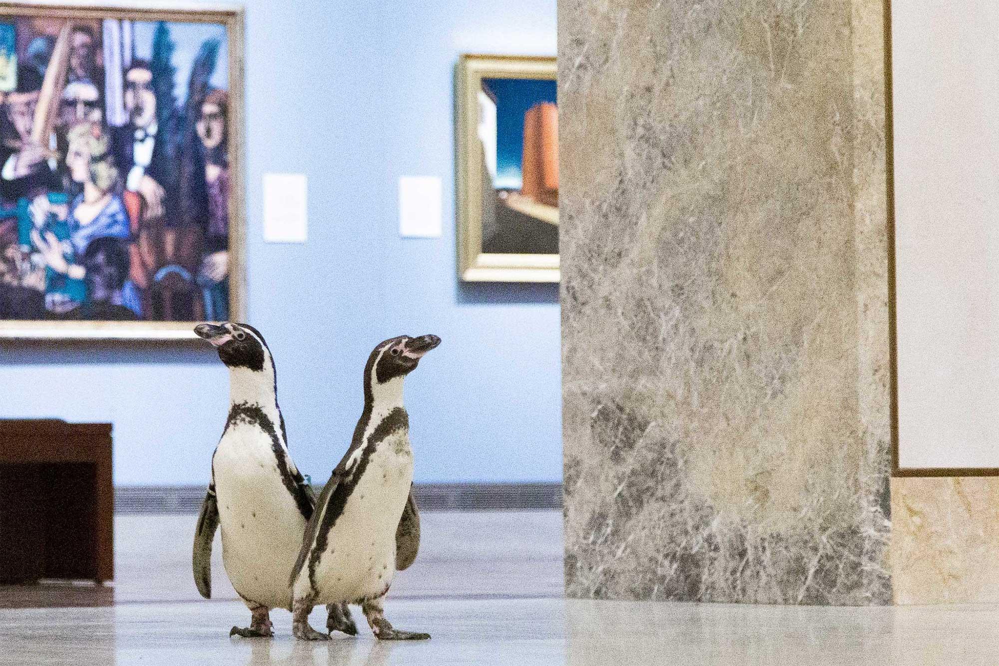 Nur ein paar Pinguine, die durch ein Museum laufen pinguine-im-Nelson-Atkins-museum_03