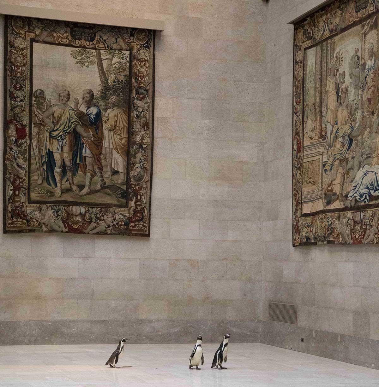 Nur ein paar Pinguine, die durch ein Museum laufen pinguine-im-Nelson-Atkins-museum_04