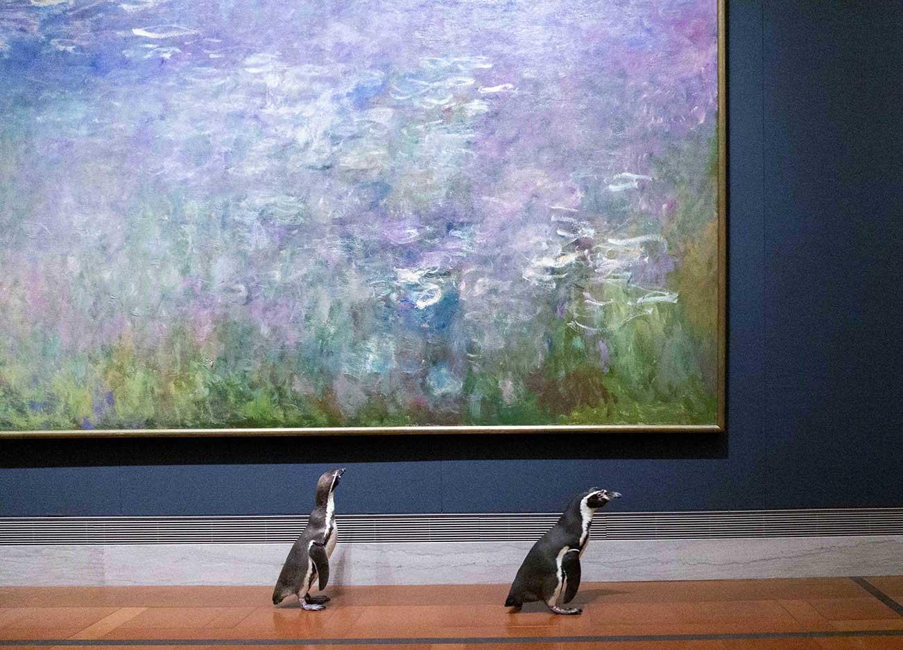 Nur ein paar Pinguine, die durch ein Museum laufen pinguine-im-Nelson-Atkins-museum_05