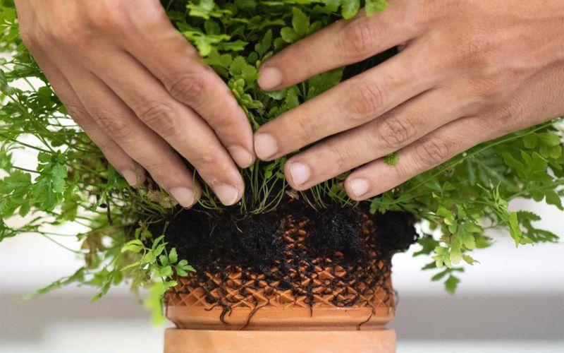 """Beim """"Terraplanter"""" wachsen Pflanzen außen am Blumentopf"""
