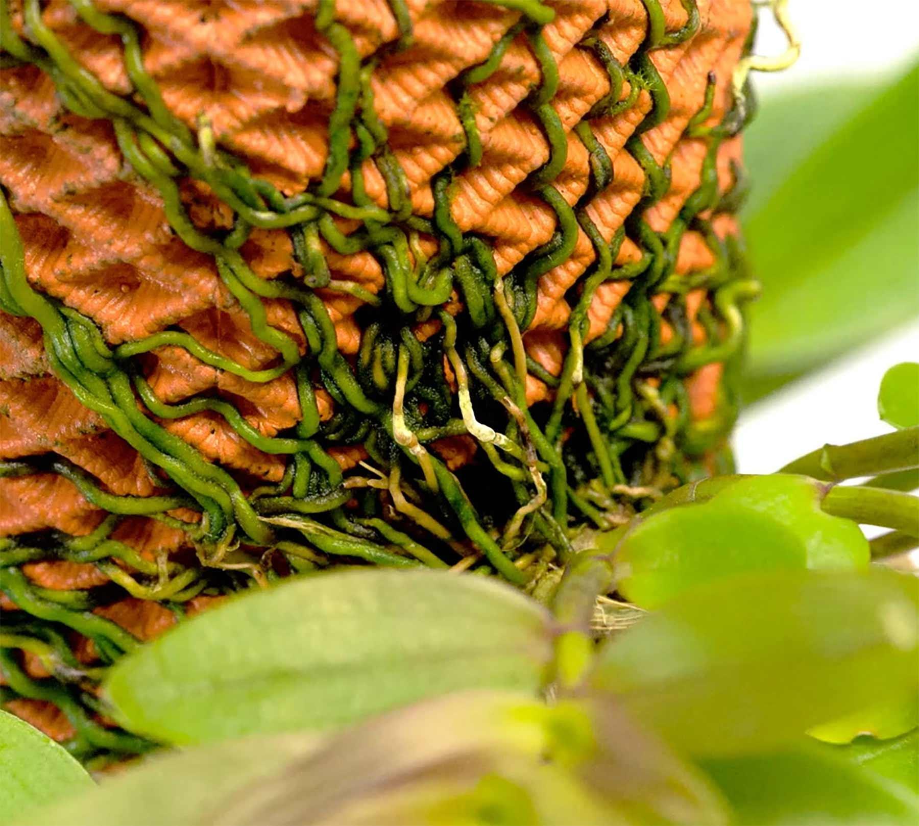 "Beim ""Terraplanter"" wachsen Pflanzen außen am Blumentopf Terraplanter_Blumentopf-smart_02"