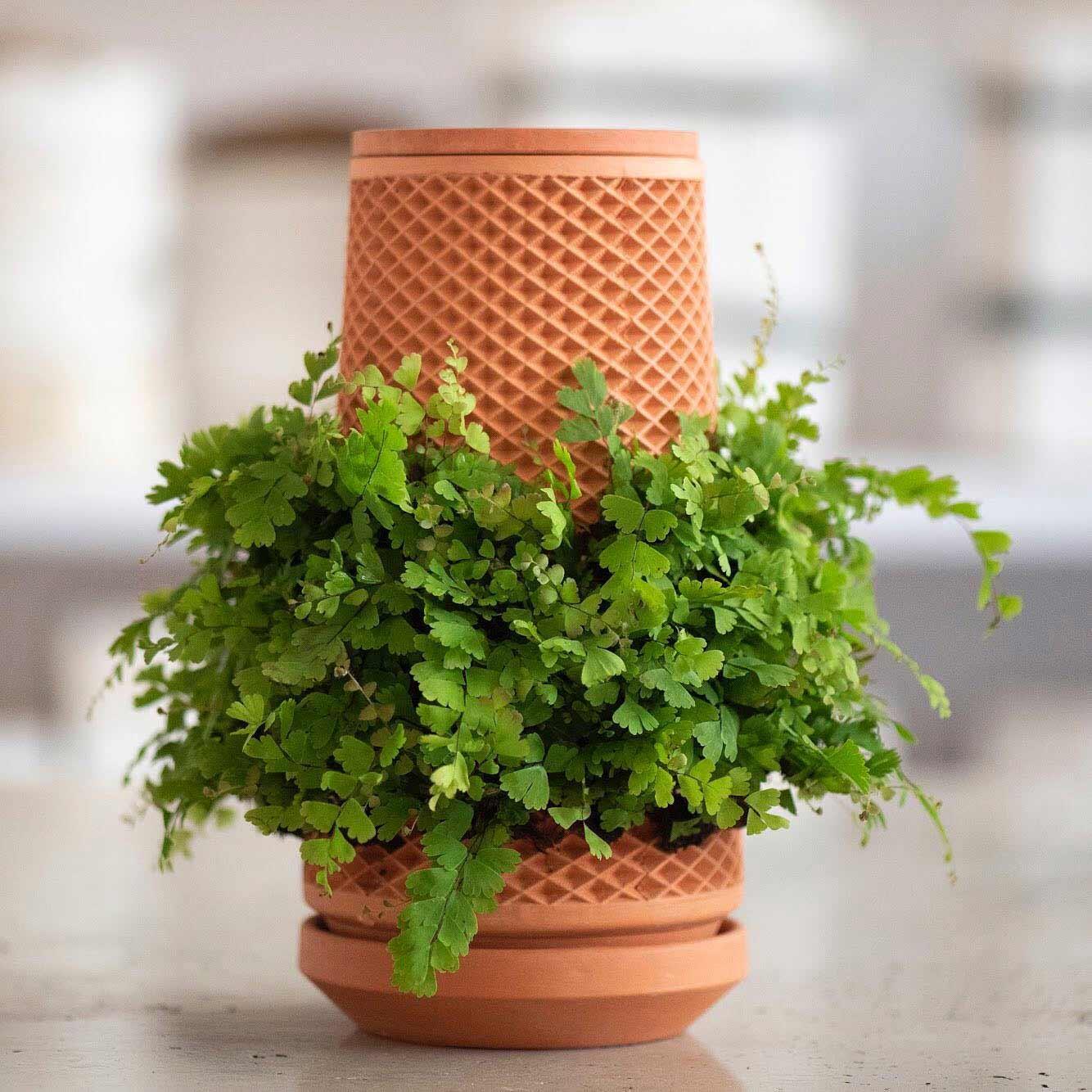 "Beim ""Terraplanter"" wachsen Pflanzen außen am Blumentopf Terraplanter_Blumentopf-smart_05"