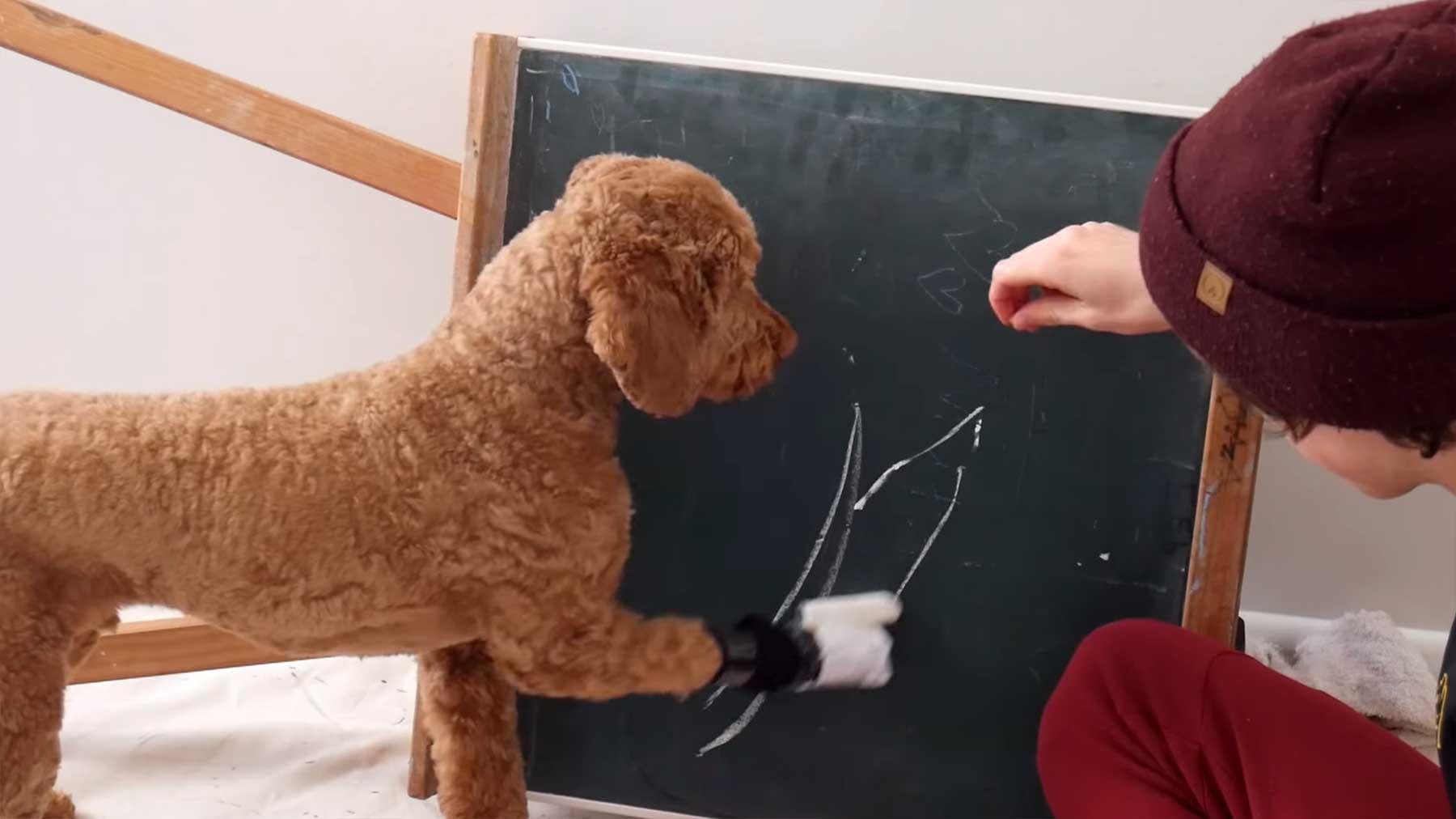 Hund schreibt seinen eigenen Namen