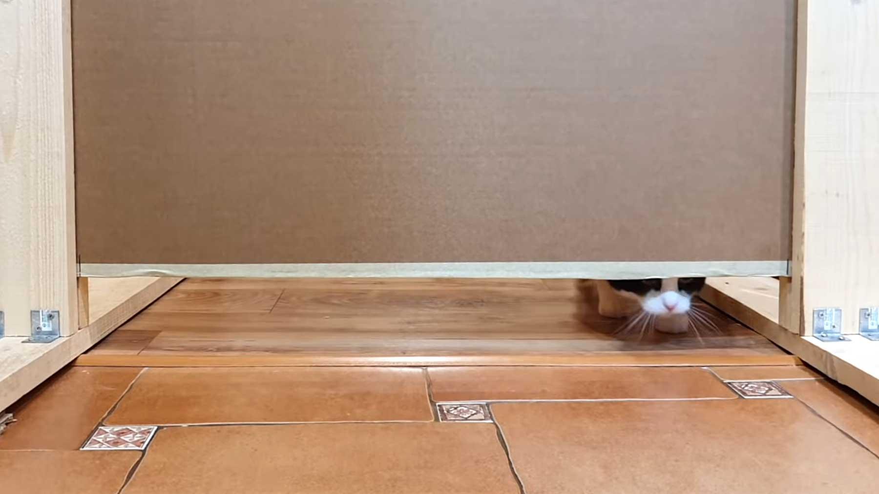 Wie klein kann ein Schlitz sein, dass eine Katze noch hindurch kommt?