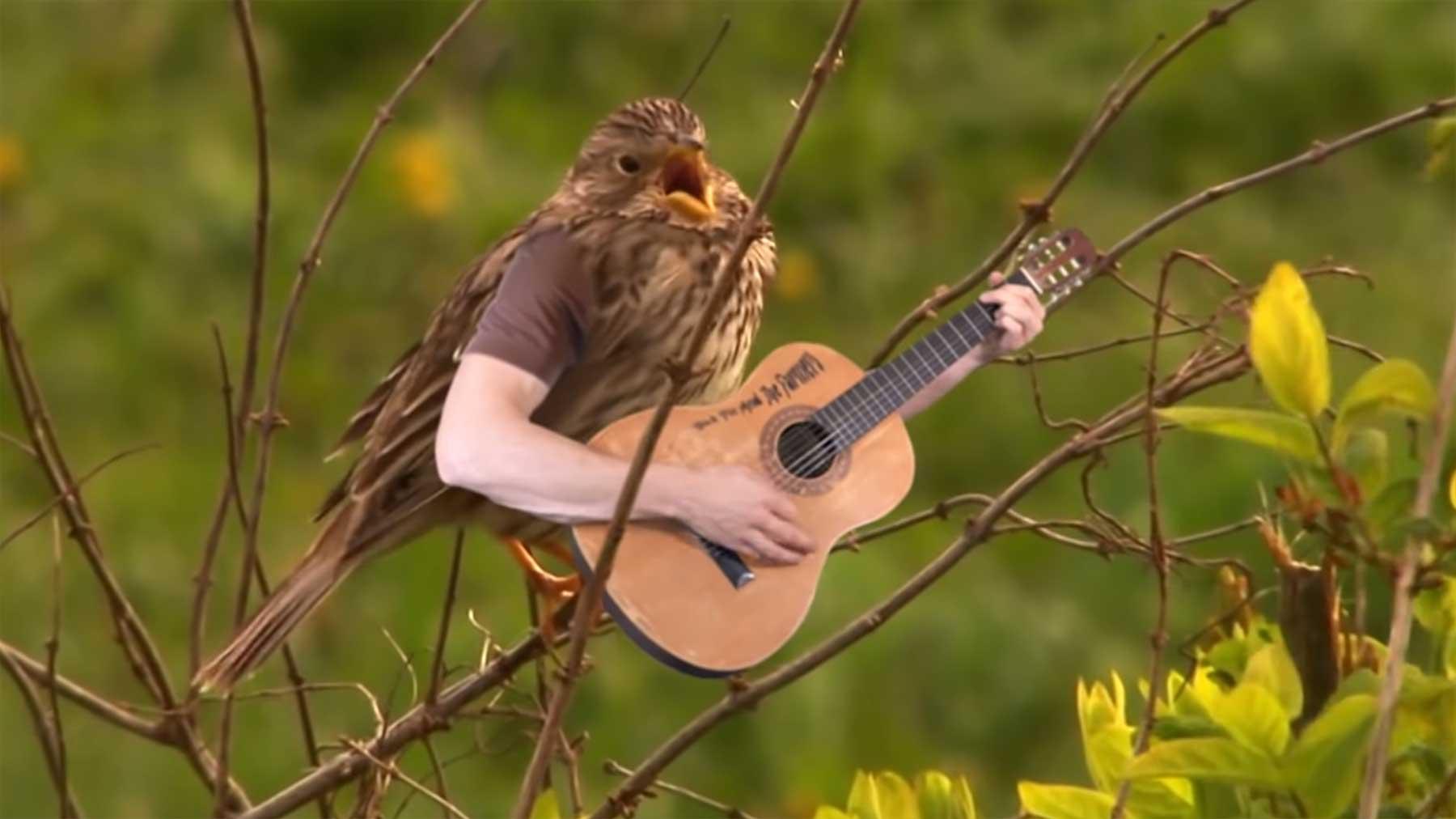 Wenn Vögel Arme hätten…