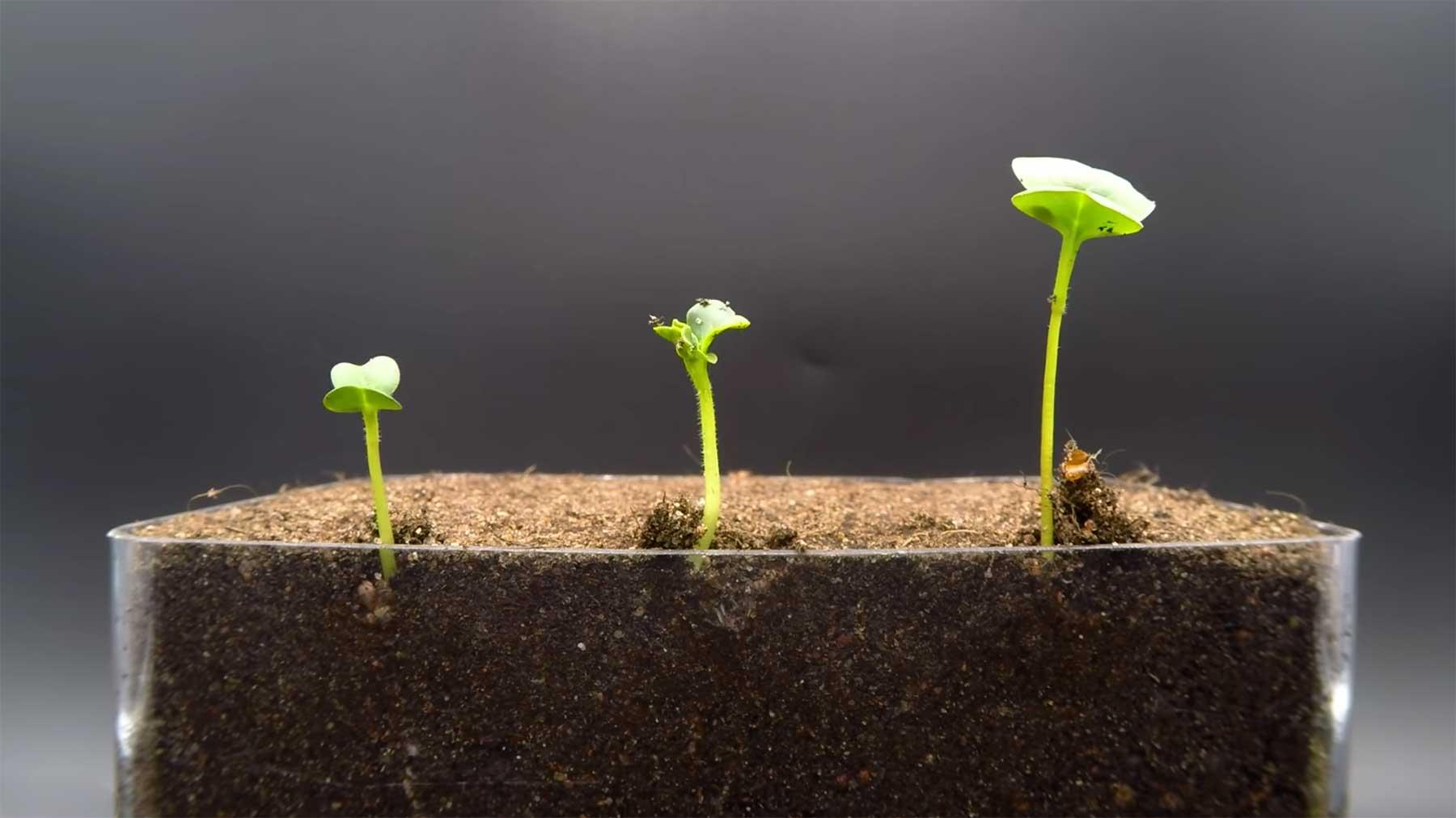 Pflanzen beim Wachsen zuschauen