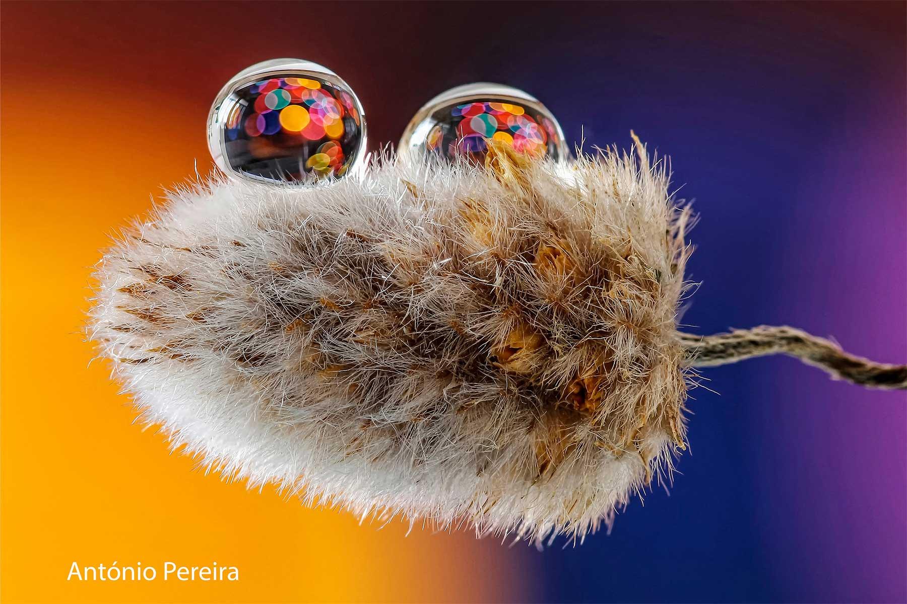 Wassertropfen-Fotografien von António Pereira Antonio-Pereira-Water-Drops-photography_07
