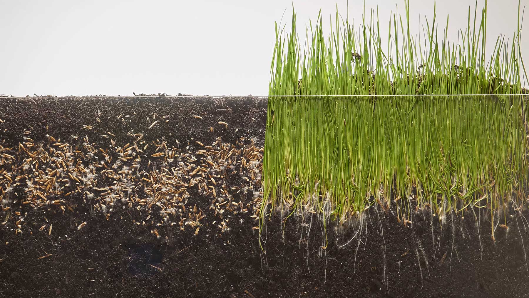 Gras beim Wachsen zuschauen