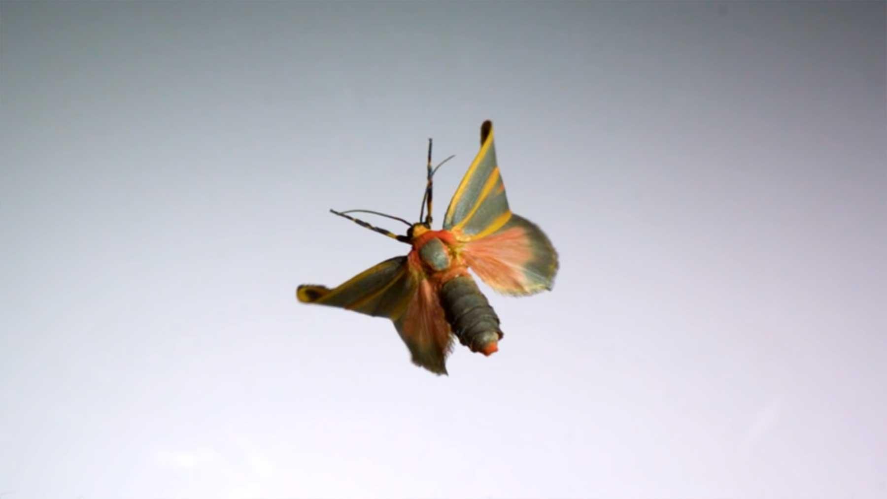 Insektenflüge in Superzeitlupe
