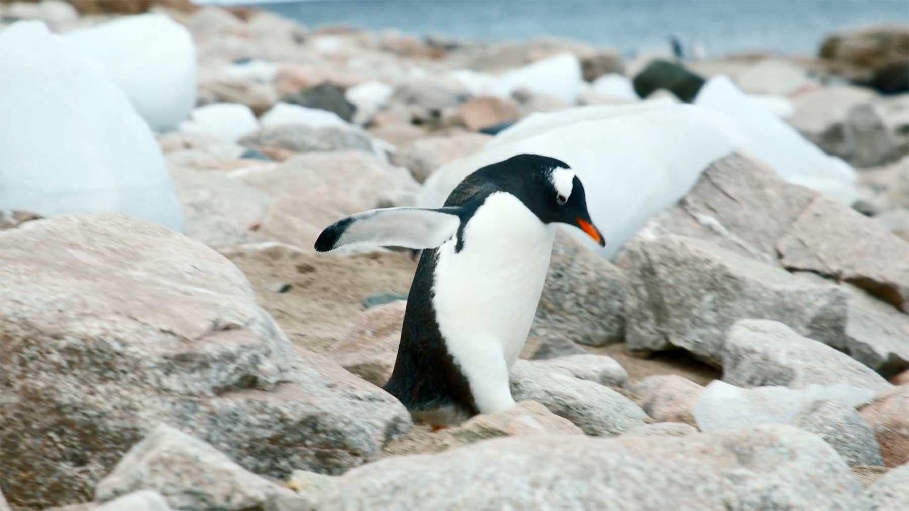 Eine Videoreise in die Antarktis