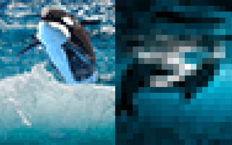 Tierbilder aus so wenigen Pixeln, wie es noch Exemplare davon auf der Welt gibt