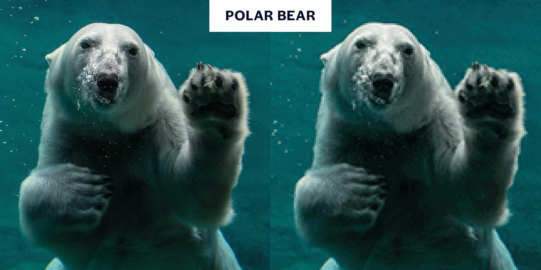 Tierbilder aus so wenigen Pixeln, wie es noch Exemplare davon auf der Welt gibt Aussterbende-Pixel-tiere_02