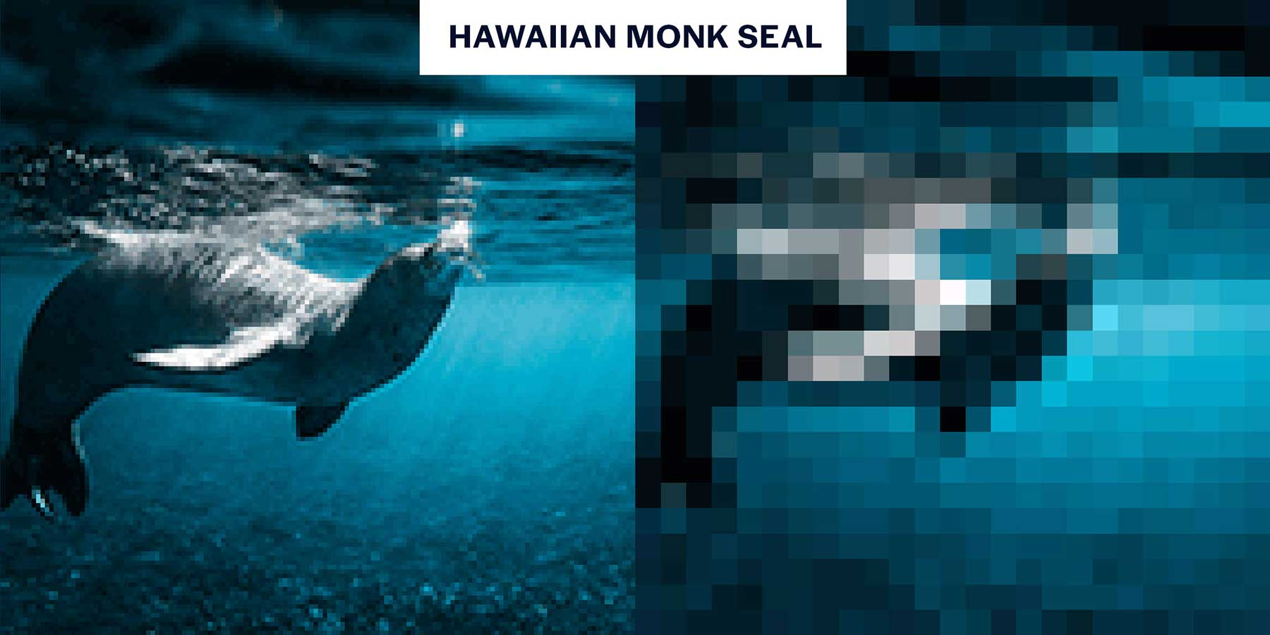 Tierbilder aus so wenigen Pixeln, wie es noch Exemplare davon auf der Welt gibt Aussterbende-Pixel-tiere_04