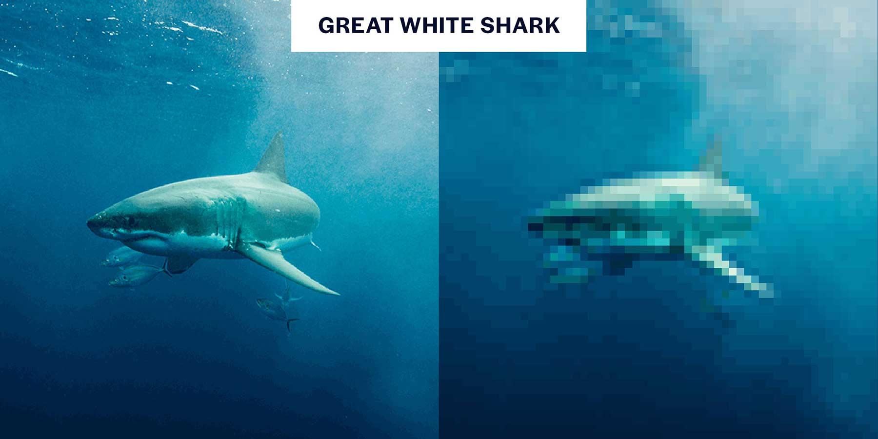 Tierbilder aus so wenigen Pixeln, wie es noch Exemplare davon auf der Welt gibt Aussterbende-Pixel-tiere_05