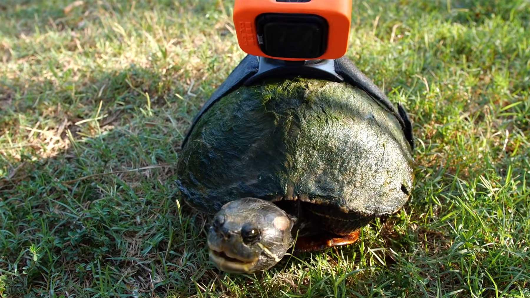 An Tag am Teich aus der Sicht einer Schildkröte
