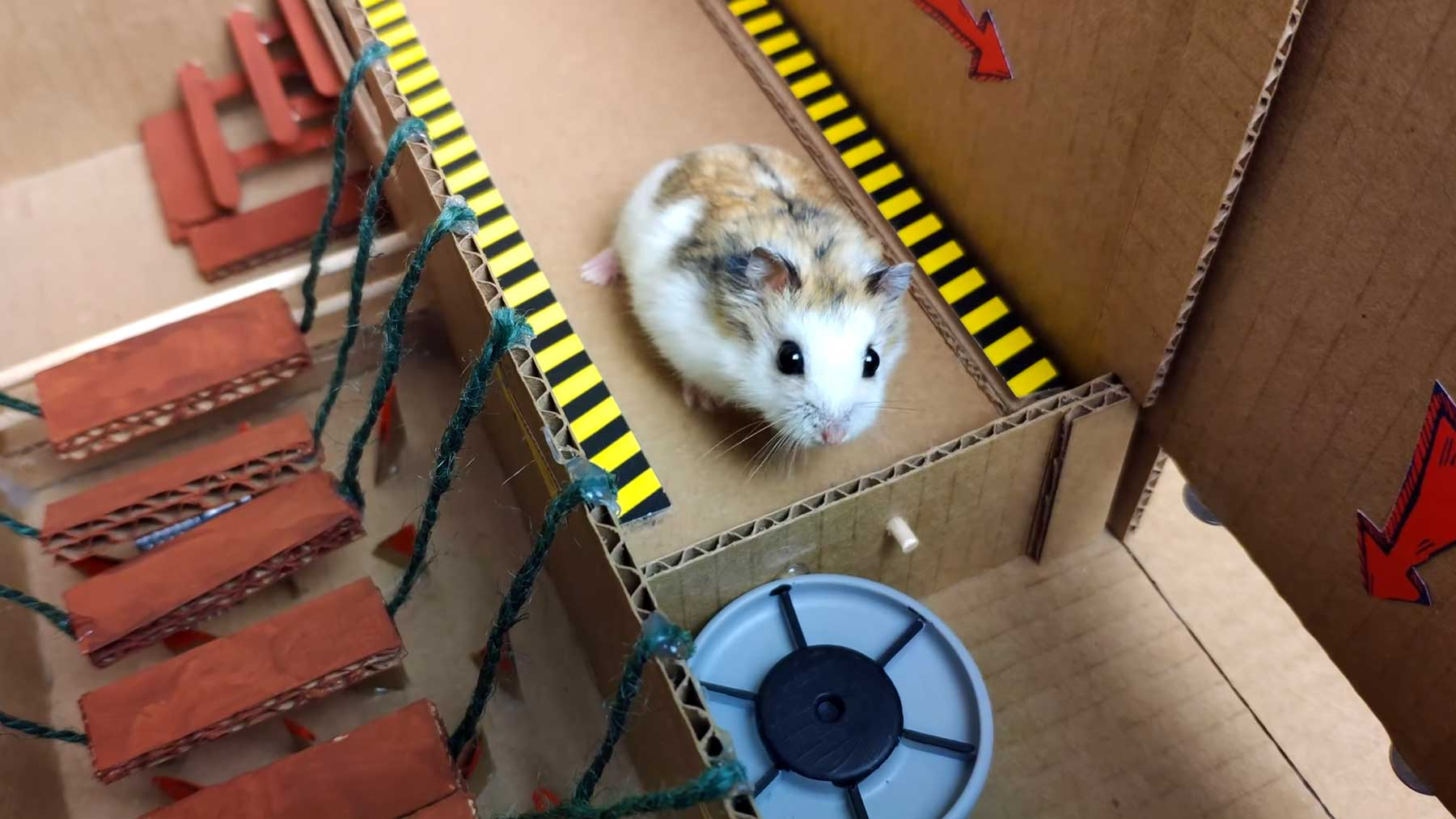 Selbstgebasteltes Hamster-Labyrinth