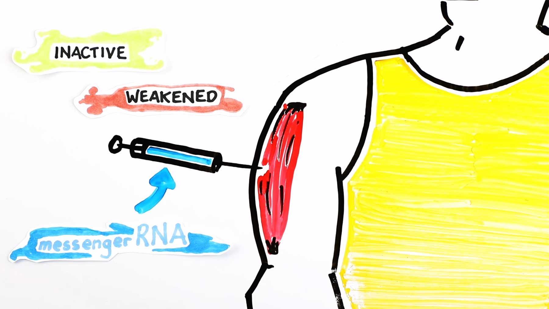 Erklärung: Das macht der Coronavirus-Impfstoff mit dem Körper