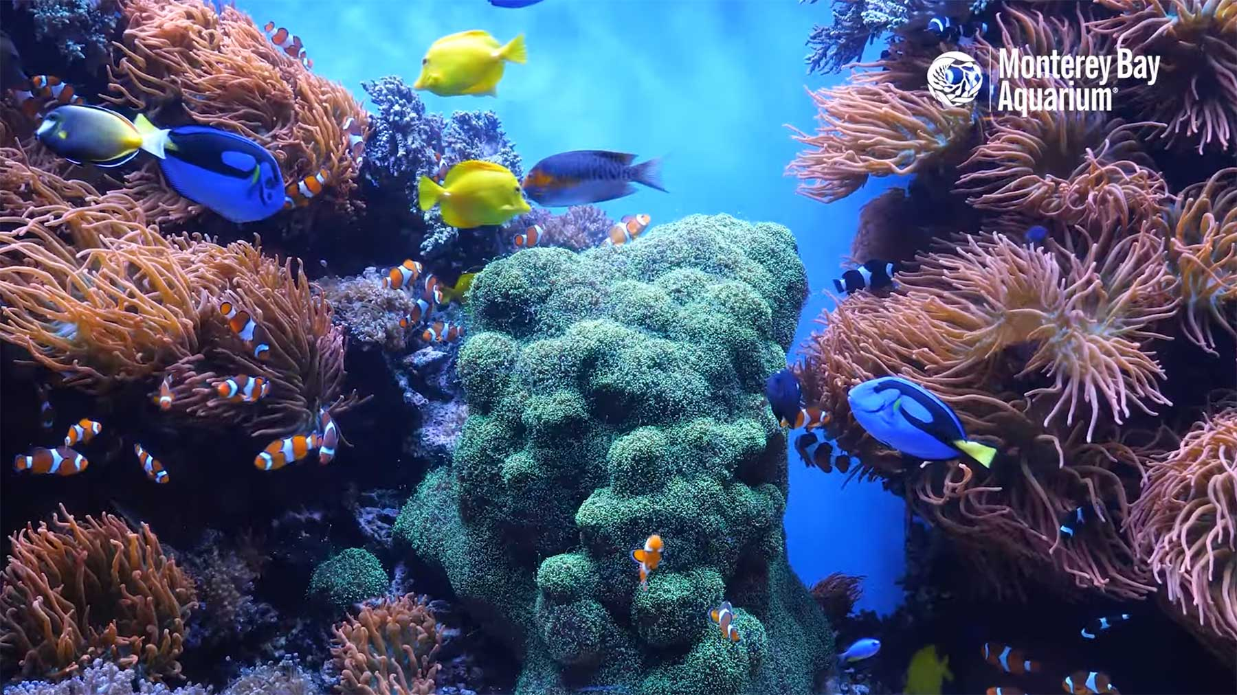 12 Stunden Aquarium mit tropischen Korallen-Fischen 12-Hours-Of-Tropical-Coral-Reef-Fishes-At-Monterey-Bay-Aquarium