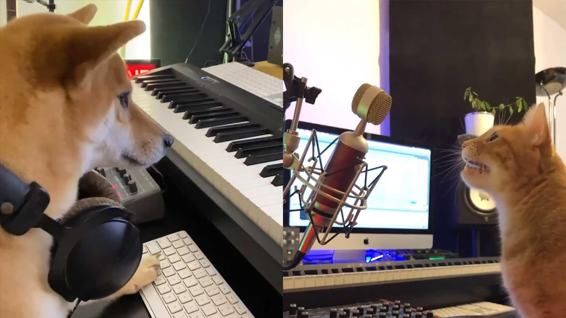 Wenn man Katze oder Hund alleine mit dem DJ-Equipment lässt…