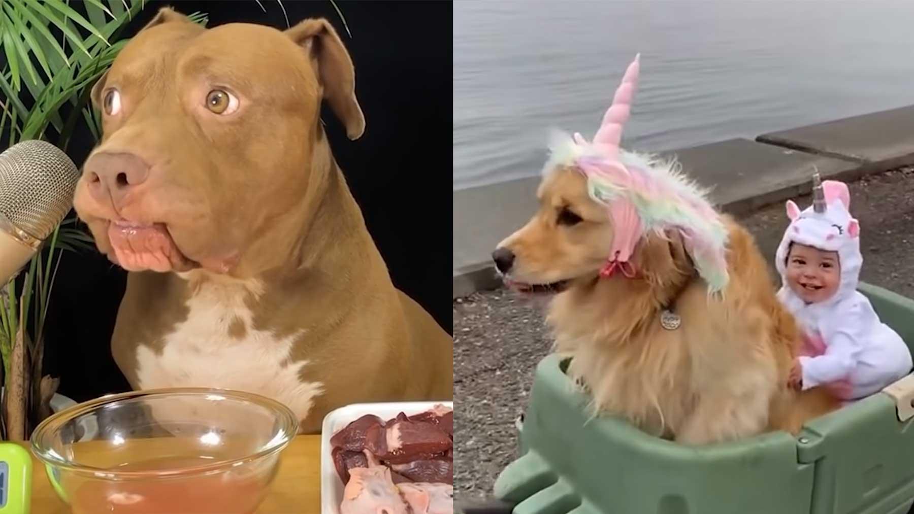 Die tollsten Hunde des Jahres 2020