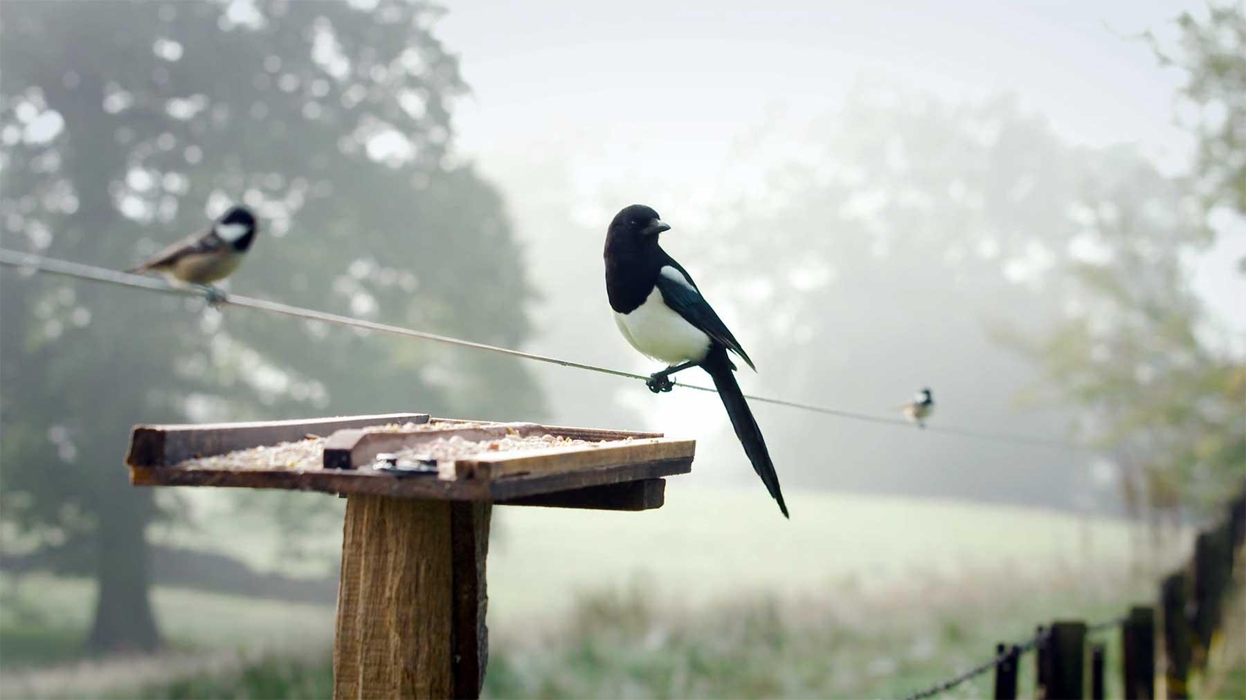 Verstärkte Geräusche von Vögeln, die auf einem Drahtseil landen voegel-auf-drahtseil-sound