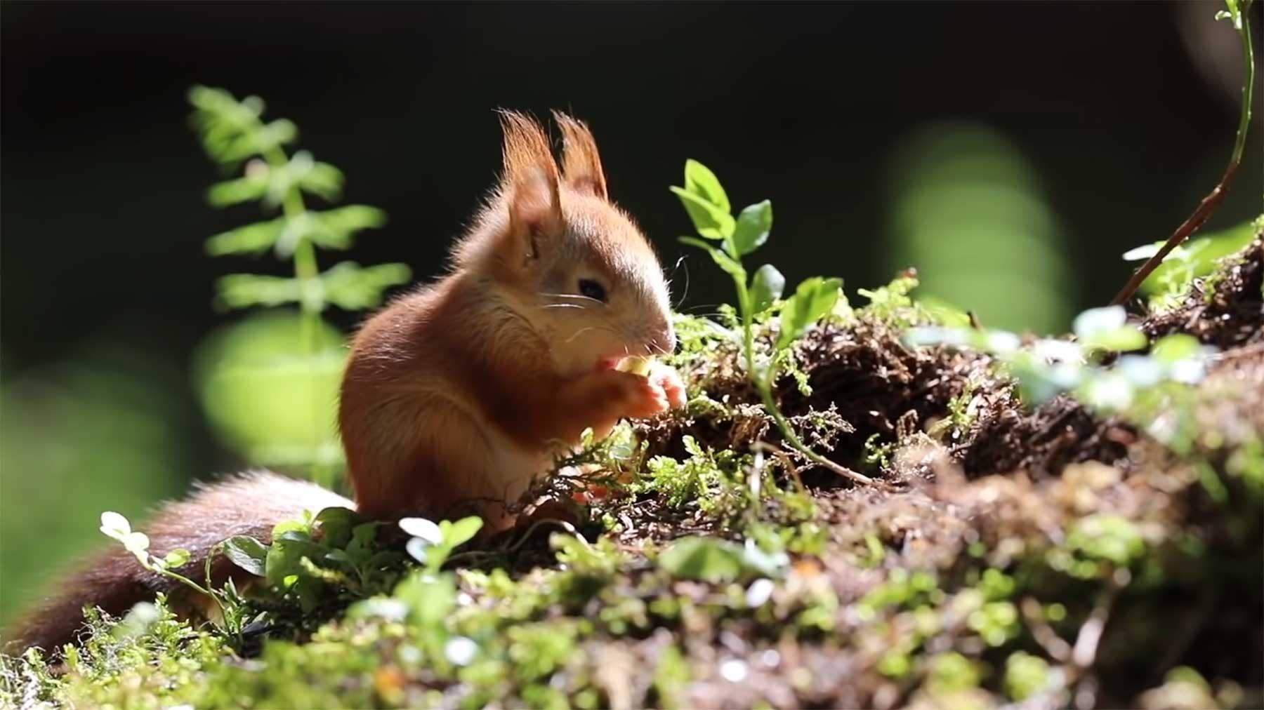 Fotografin rettet kleine Baby-Eichhörnchen