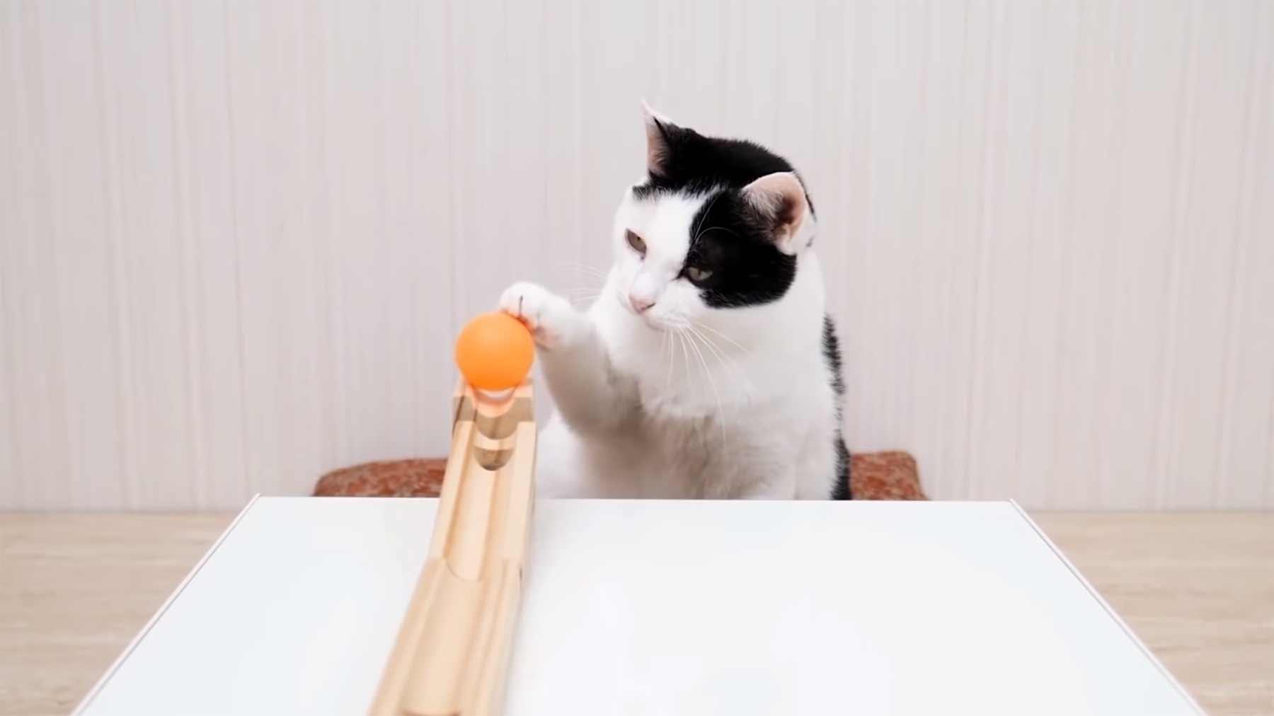 Katzen & Tischtennisball-Trickshots