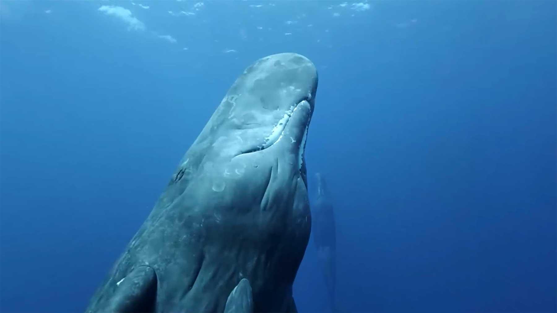 Mit Walen tauchen im interaktiven 360-Grad-Video