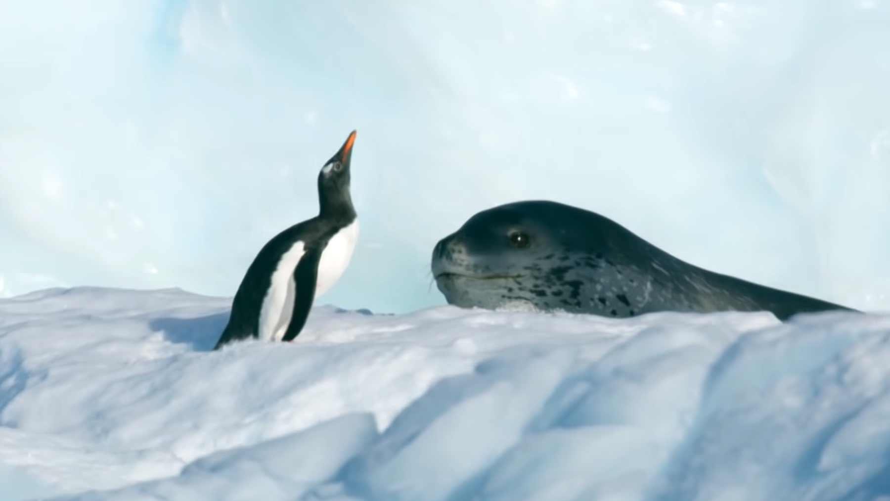 Pinguin vs. Seeleopard