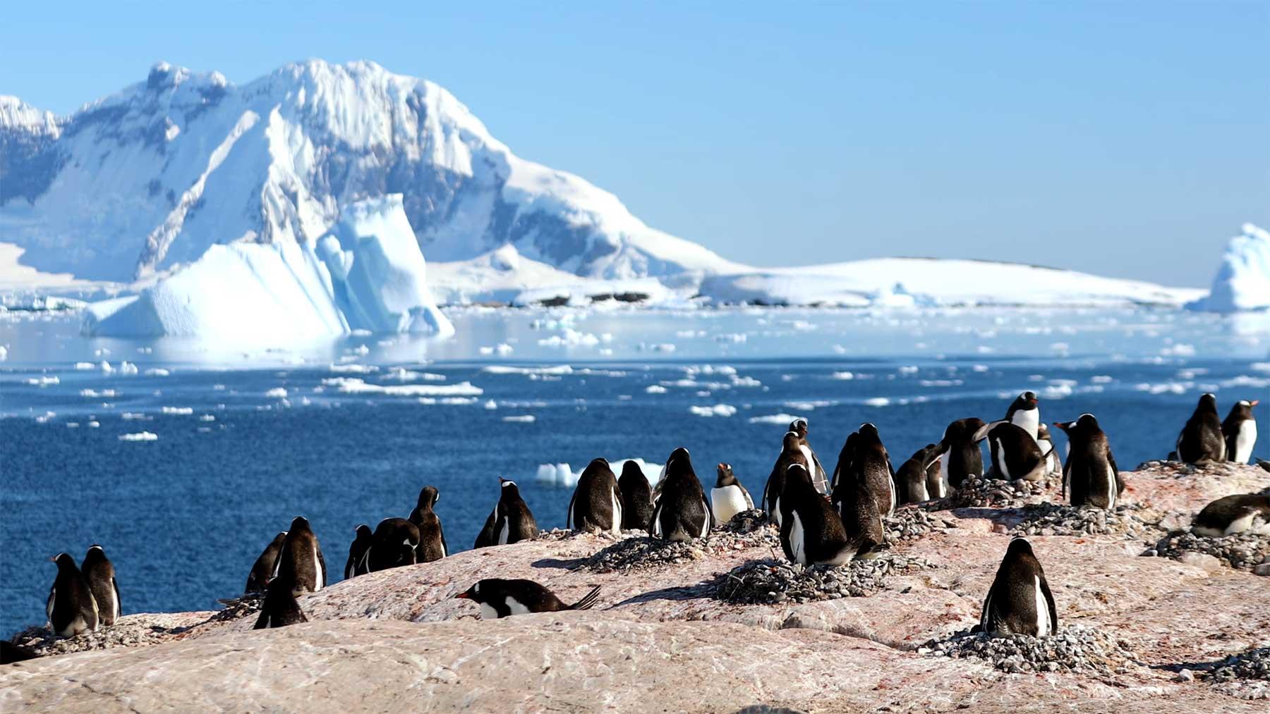 2 Stunden Antarktis: Pinguine und Meer!