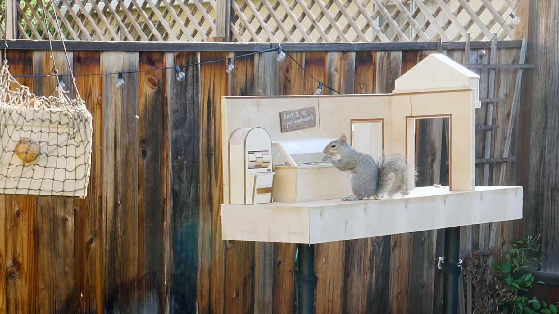 Mark Rober hat einen neuen Eichhörnchen-Parcours im Garten aufgebaut