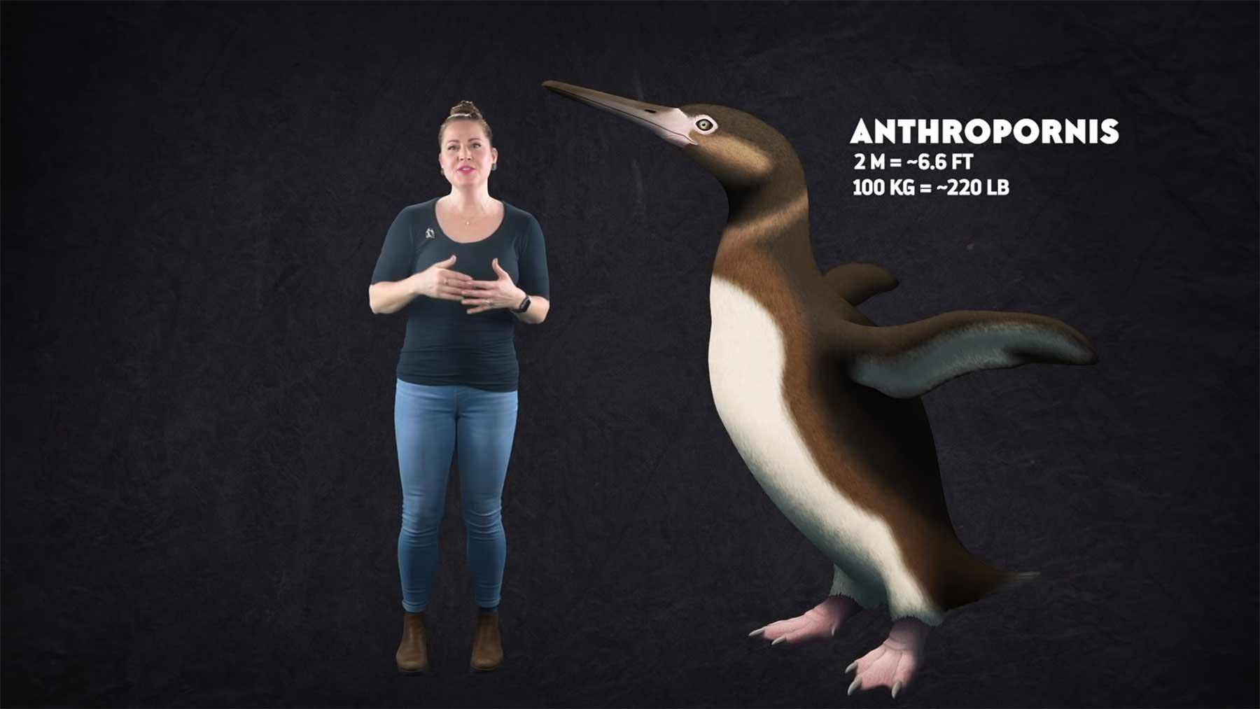 Wieso können Pinguine nicht (mehr) fliegen?