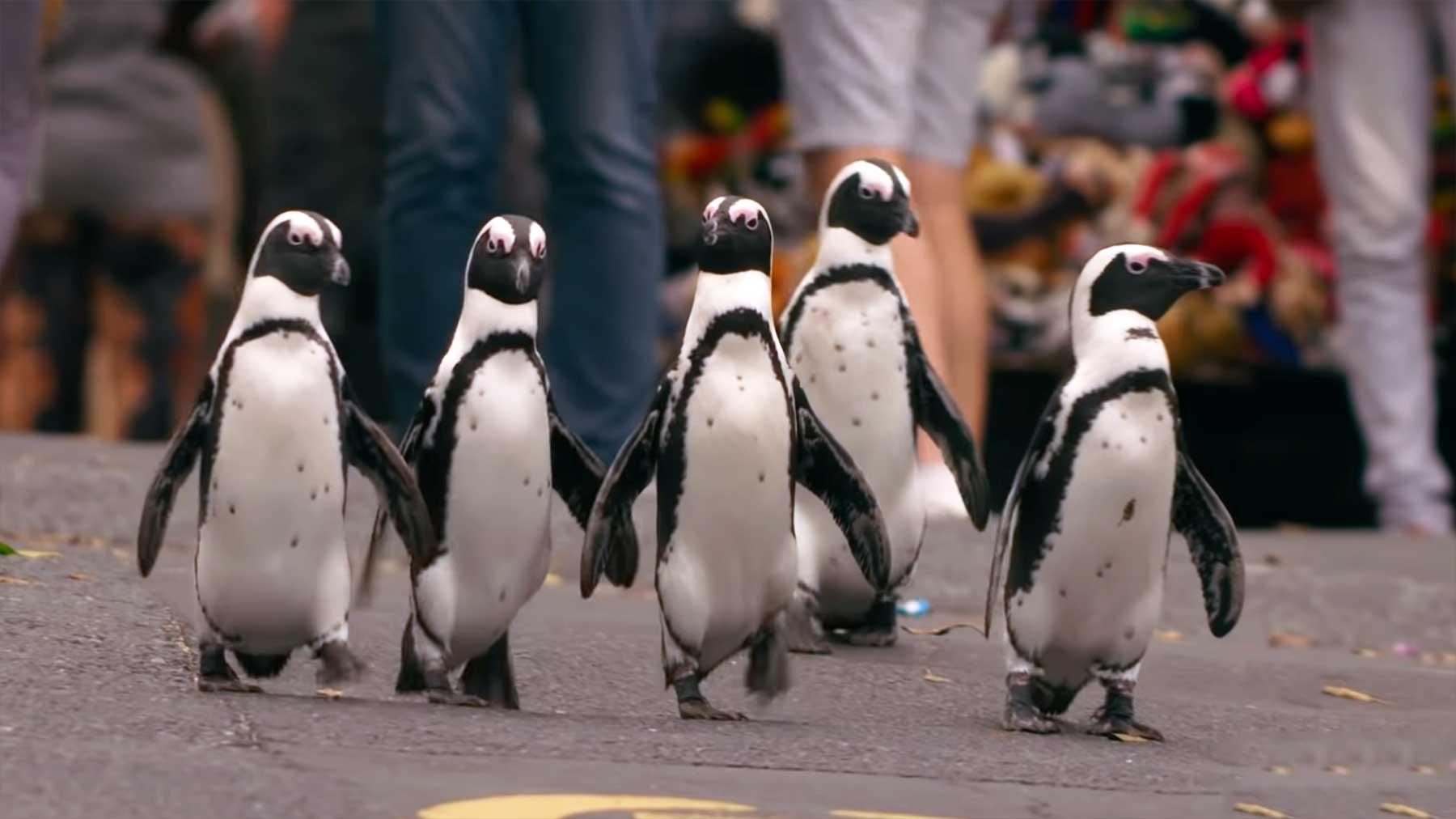 """""""Penguin Town"""": Trailer zum Netflix-Wildlife-Special"""