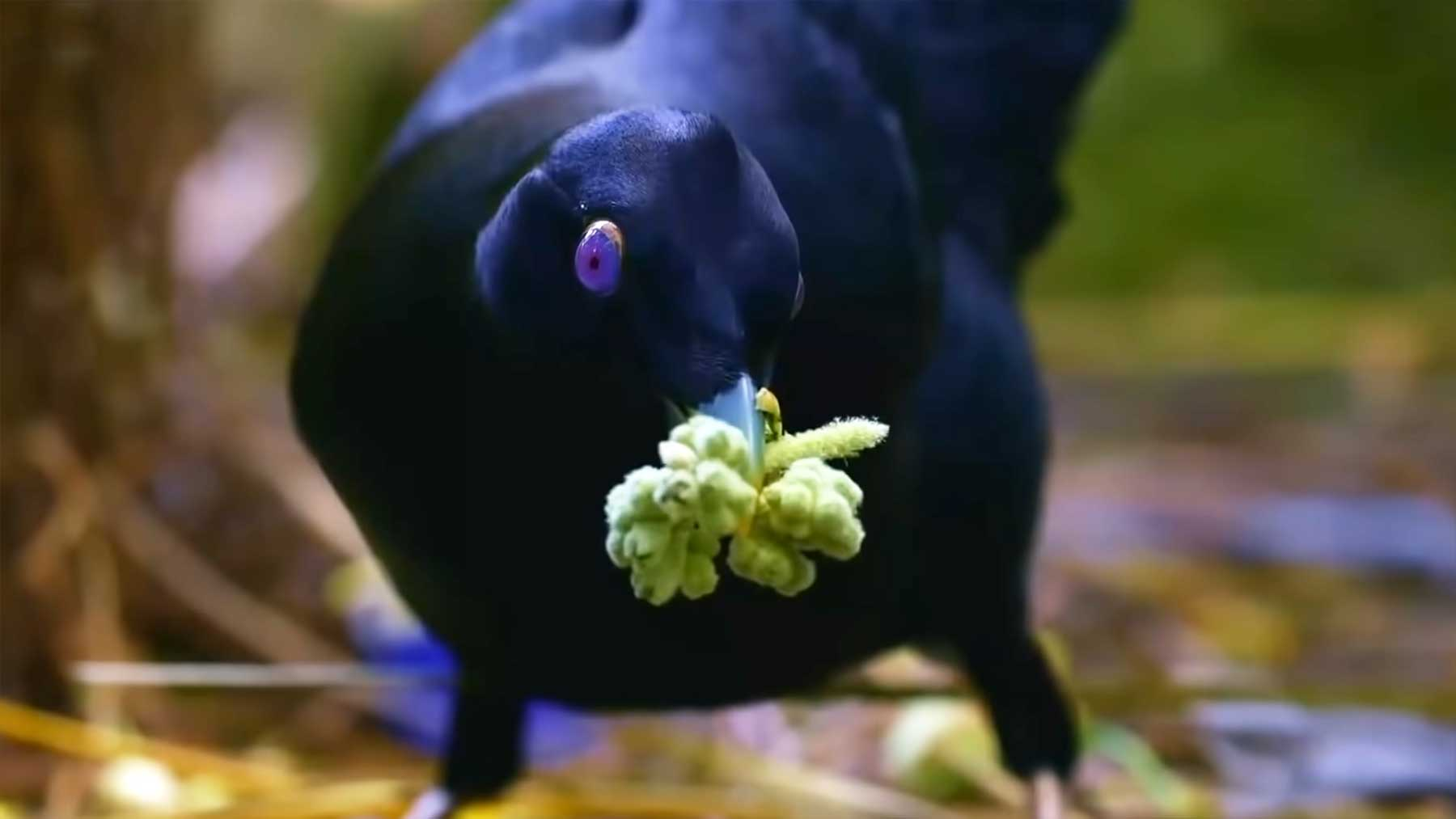 Vögel, die sich ungewöhnlich verhalten