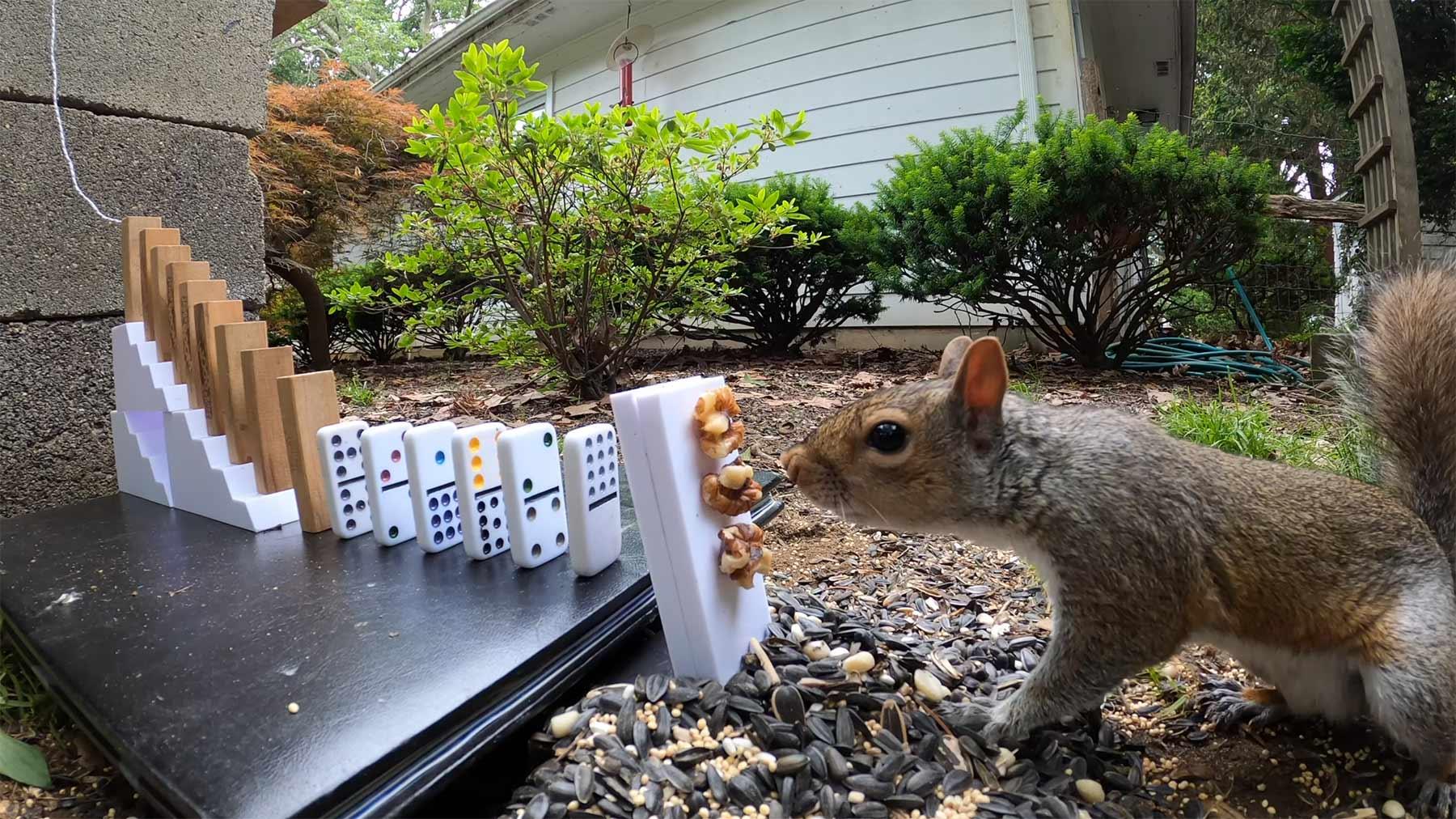 Kettenreaktion zum Eichhörnchen-Füttern Eichhoernchen-fuetter-kettenreaktion-maschine