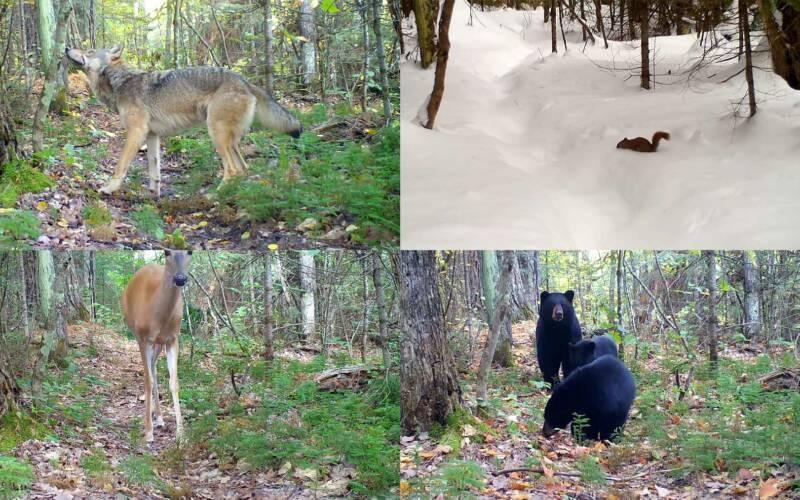 So viele Tiere kreuzen binnen eines Jahres einen Waldpfad