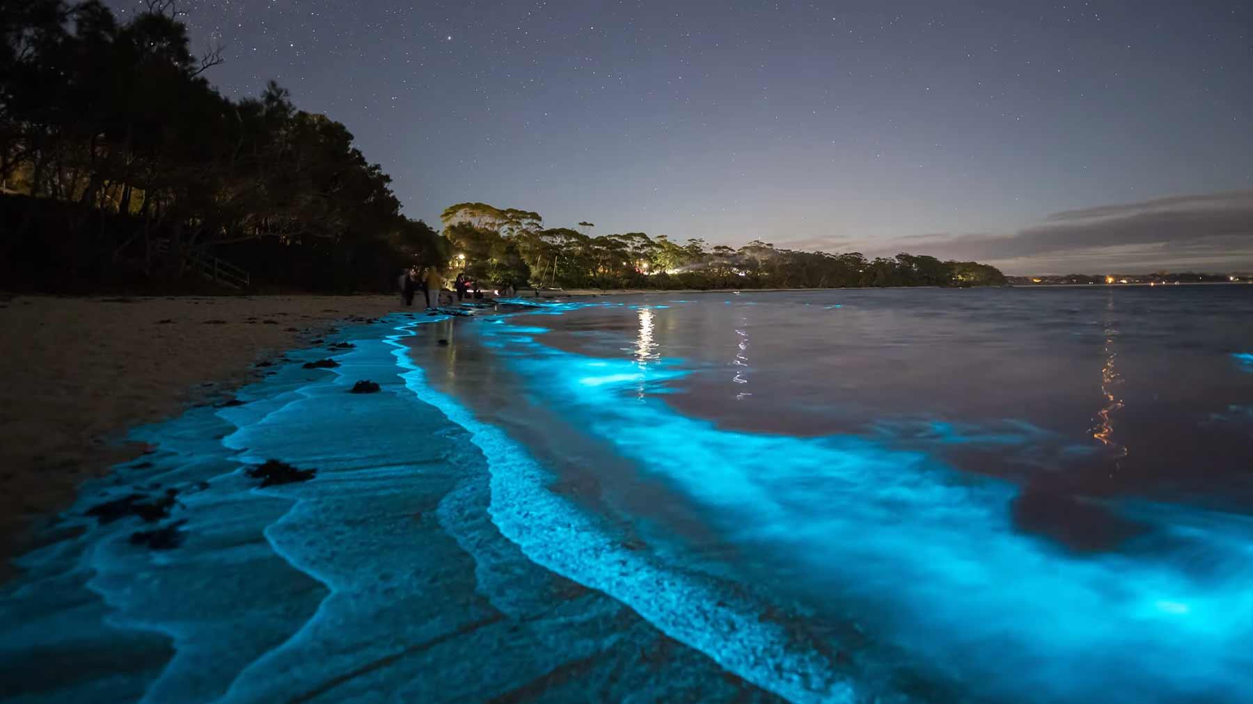 Exotische Biolumineszenz in Australien
