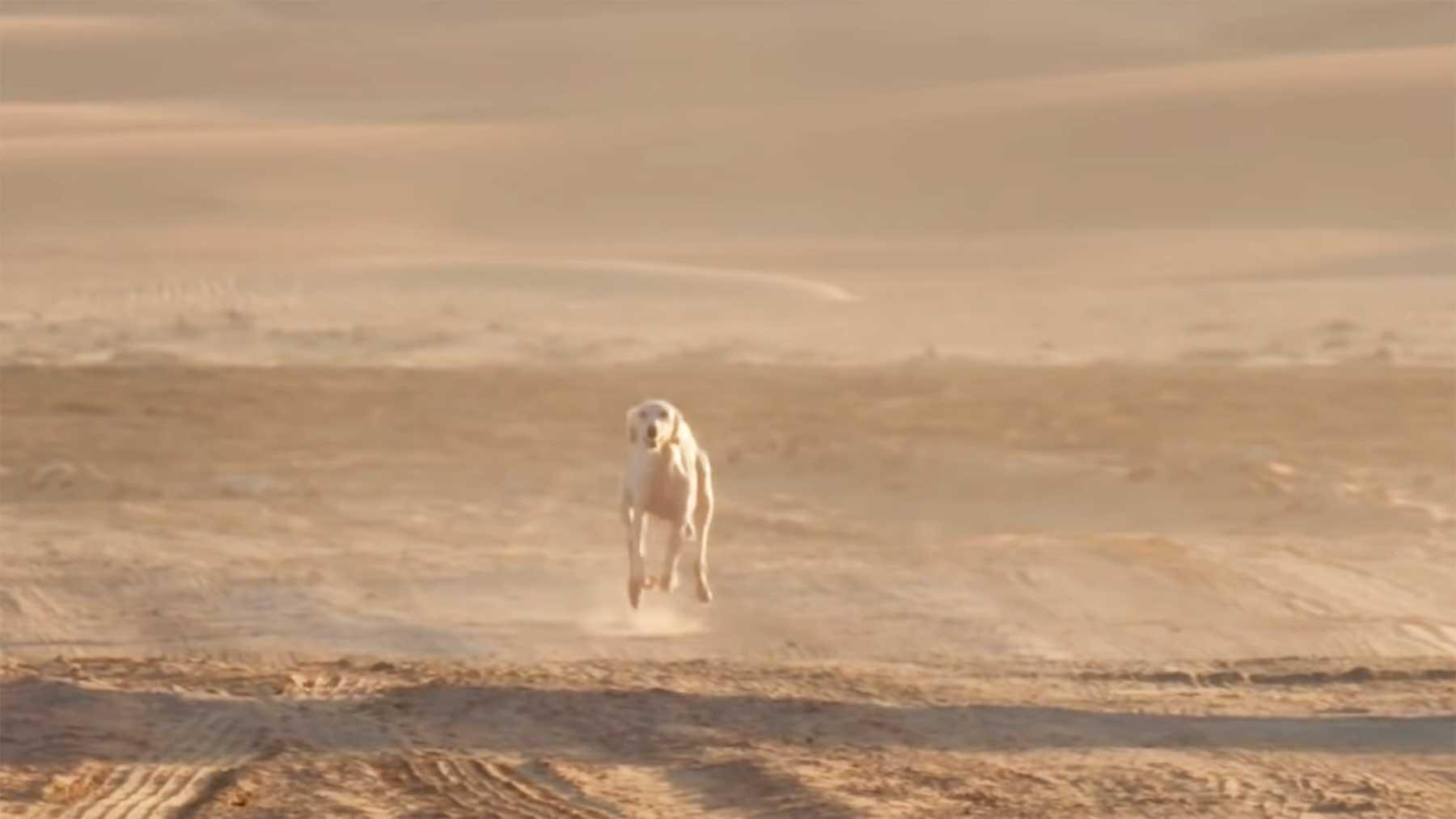 Einer der schnellsten Hunde der Welt schnellster-hund-der-welt