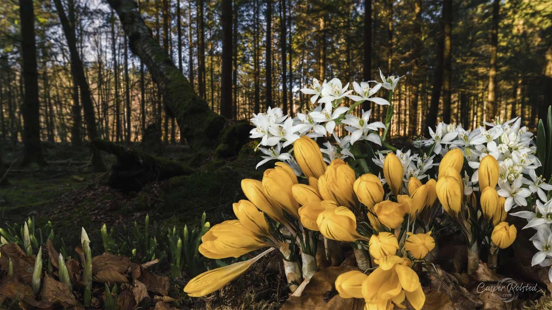 Die Schönheit des Dänischen Frühlings