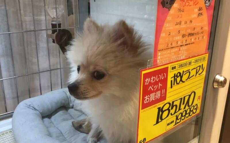 Dokumentation: Japan und der Tierschutz